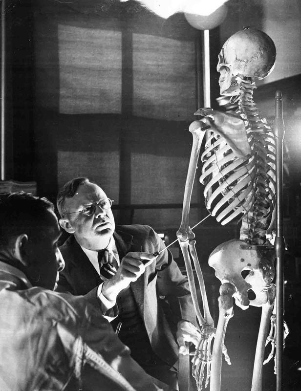Photographs of Alan Richards Moritz with skeleton, circa 1946.