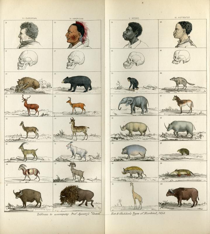 """Tableau to accompany Prof. Agassiz's 'Sketch"", Nott & Gliddon's Types of Mankind, 1854."""