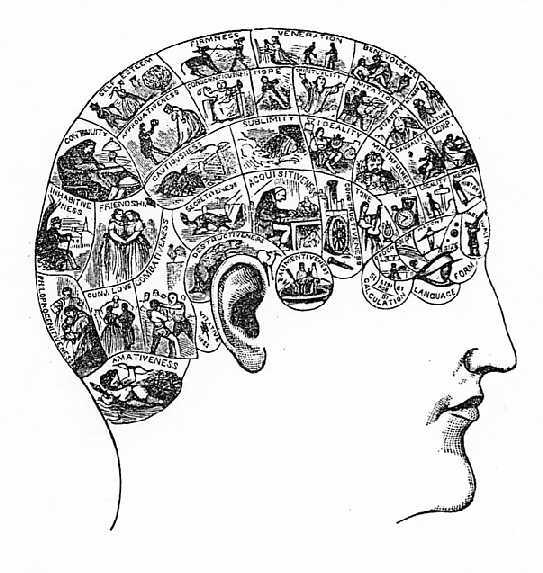 Diagram of the Phrenological Faculties
