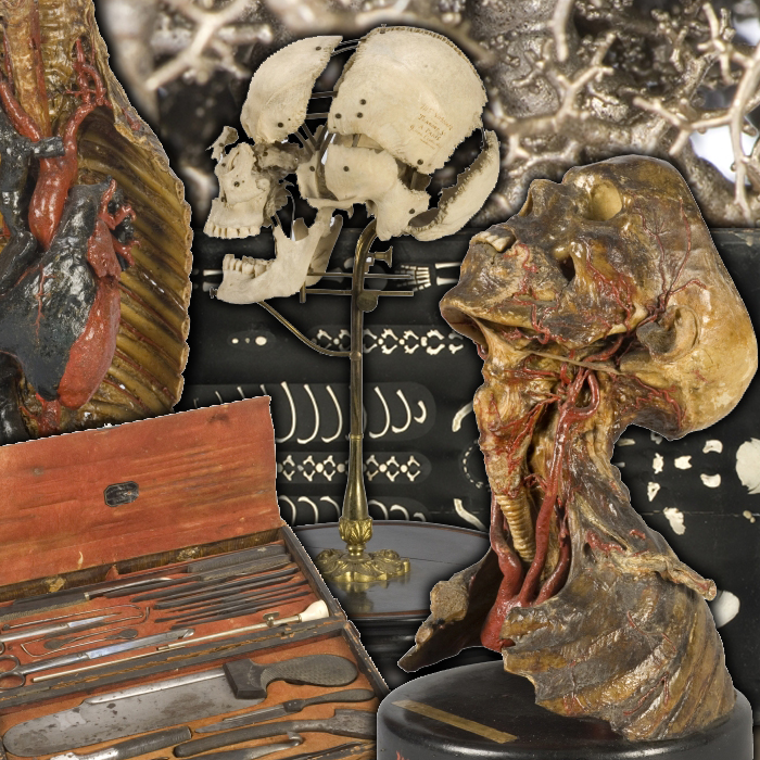 Body of Knowledge, A History of Anatomy (in 3 parts) · OnView ...