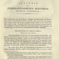 Anatomie der Rohren-Holothurie des pomeranzfarbigen Seesterns und Stein-Seeigels