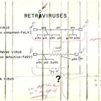 Retroviruses: Feline Leukemia Virus