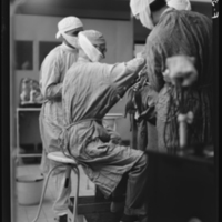 Harvey Cushing seated while working on the 2,000th tumor operation