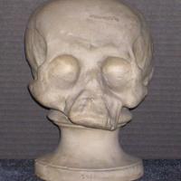 Phrenology cast of skull of Native American individual, 1812-1845