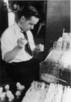 Maxwell Finland, at work in the Thorndike Memorial Laboratory