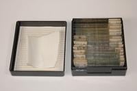 Bovine cornea slides, 1986