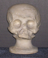 Phrenology cast of skull of Native American individual, 1812-1845