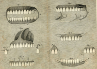 ... .... Tooth Fairy .... on Pinterest   Dental, Teeth and Dentists