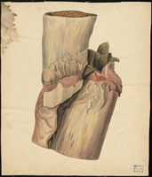 Teaching watercolor of bone and tissue