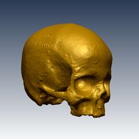 Skull two (sml) pic 1_cropped_resize1.jpg